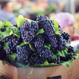 新疆夏黑葡萄